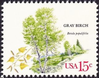 Us - 1978 - 15 Cents Gray Birch American Trees Commemorative Issue 1767 Nh Vf photo