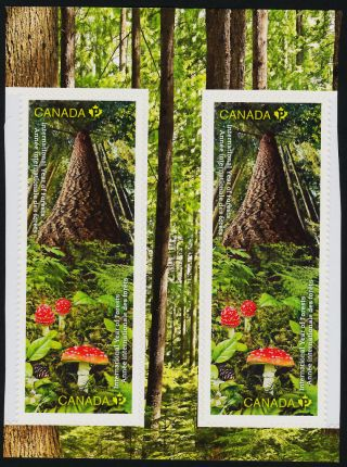 Canada 2462 - 3 Gp Trees,  Mushrooms,  International Year Of The Forests photo