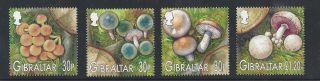 Gibraltar 950 - 953 photo