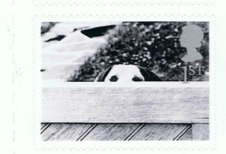 Dog At Garden Fence Image 2001 Self - Adhesive British Stamp - Nh - Rare photo
