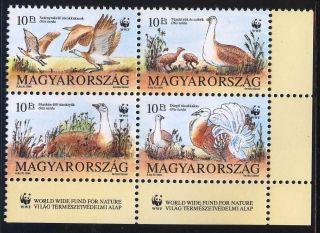 Hungary - 1994.  World Wildlife Fund / Otis Tarda In Four Block Mi:4282 - 85 photo