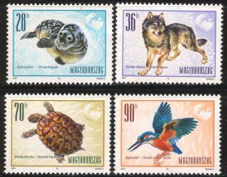 Hungary - 2001.  European Animals / Sea - Dog / Wolf / Turtle / Kingfisher photo