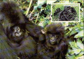 (70459) Maxicard - Rwanda - Gorilla - 1985 photo