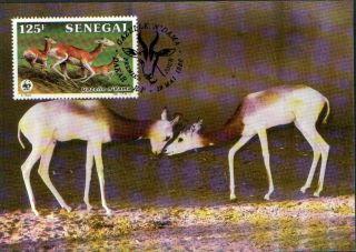 (70465d) Maxicard - Senegal - Dama Gazelle - 1986 photo