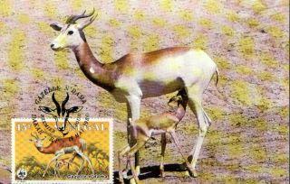 (70466) Maxicard - Senegal - Dama Gazelle - 1986 photo