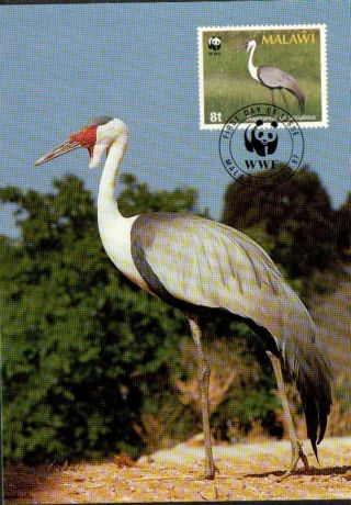 (70494) Maxicard - Malawi - Wattled Crane - 1987 photo