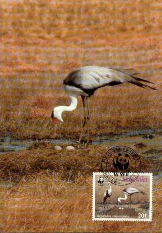 (70496) Maxicard - Malawi - Wattled Crane - 1987 photo