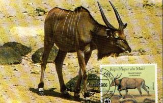(70512) Maxicard - Mali - Eland - 1986 photo