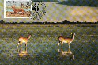 (70547) Maxicard - Zambia - Antelope Lechwe - 1987 photo