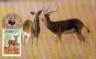 (70548) Maxicard - Zambia - Antelope Lechwe - 1987 photo