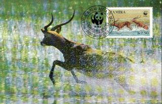 (70549) Maxicard - Zambia - Antelope Lechwe - 1987 photo