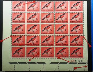 South Africa 1964 – 3c Ctrl Block Of 25,  Varieties & Perf Error,  Pls Read Info photo