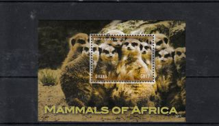 Ghana 2013 Mammals Of Africa 1v S/s Meerkat Wildlife Wild Animals Suricata photo