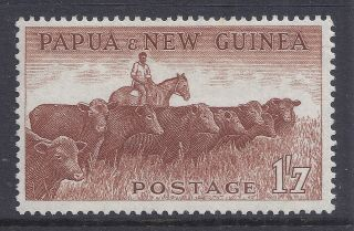 1958 - 1960 Papua Guinea 1/7d Cattle Mvlh Our Ref B4 photo