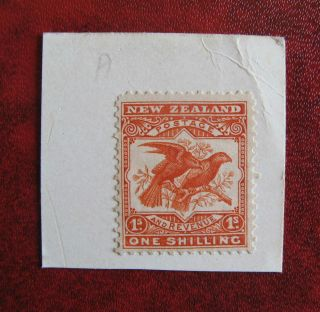 Zealand 1898 1 Shilling Kaka,  On Piece,  Scarce photo