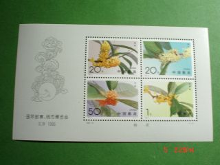 1995 China Sweet Osmanthus Sheet Of 4 (scott 2563 - 2566) photo