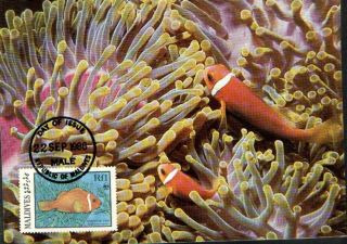(70520) Maxicard - Maldives - Anemonefish - 1986 photo