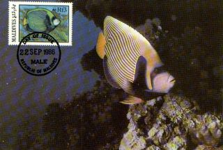 (70521) Maxicard - Maldives - Emperor Angelfish - 1986 photo