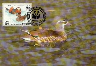 (70528) Maxicard - Korea - Mandarin Duck - 1986 photo
