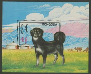 Mongolia 2052 Dog photo