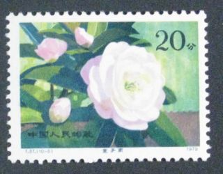 Pr China 1979 T37 - 5 Camellias Sc 1534 photo