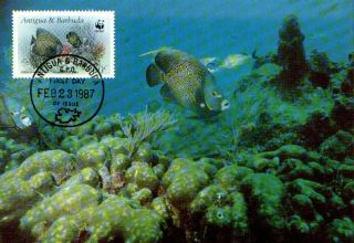 (70500) Maxicard - Antigua Barbados - French Angelfish - 1987 photo