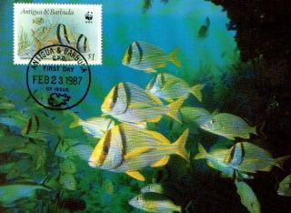 (70501) Maxicard - Antigua Barbados - Porkfish - 1987 photo