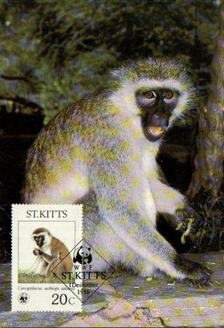 (70503) Maxicard - St Kitts - Green Monkey - 1986 photo