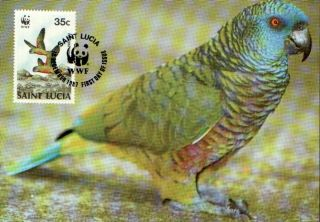 (70542) Maxicard - St Lucia - Parrot - 1987 photo