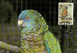 (70543) Maxicard - St Lucia - Parrot - 1987 photo