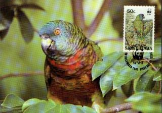 (70544) Maxicard - St Lucia - Parrot - 1987 photo
