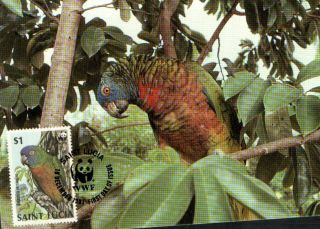 (70545) Maxicard - St Lucia - Parrot - 1987 photo