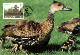 (70551) Maxicard - Bahamas - Whistling Duck - 1988 photo