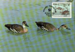 (70552) Maxicard - Bahamas - Whistling Duck - 1988 photo