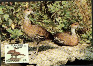 (70553) Maxicard - Bahamas - Whistling Duck - 1988 photo