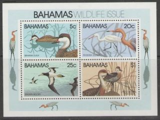 Bahamas Sgms593 1981 Wildlife photo