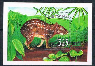 Guyana 1993 Animals Of Guyana Ms Sg 3514 photo
