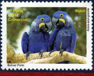 10 - 33d1 Brazil 2010 Pantanal,  Birds,  Parrot,  Depersonalized photo