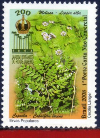 8 - V19 Brazil 2008 - Botanical Garden Of Rj,  Medicinal Popular Herbs,  Plants, photo