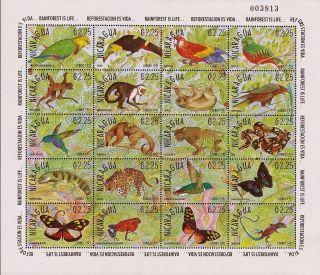 Nicaragua Fauna Of Rainforest Sc 1861 1991 photo