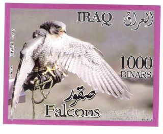 Iraq Ss - Falcons photo
