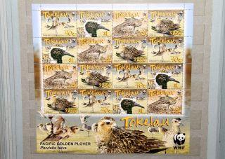 2007 Tokelau Wwf Birds Pacific Golden Plover Mini Sheet. photo