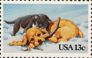 1982 Us 2025 Puppy Kitten Cats Dogs Domestic Animals Pets photo