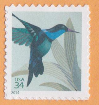 Hummingbird Bird Nature 2014 Postage Postcard Stamp Wildlife United States photo
