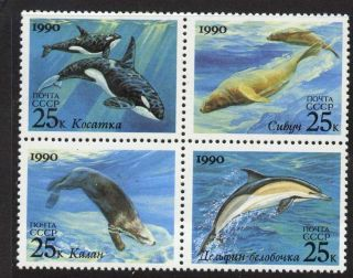 Ussr 5936a Whales,  Seals,  Dolphin photo