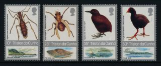 Tristan Da Cunha 404 - 7 Insects photo