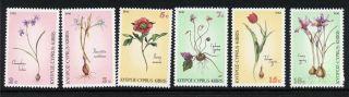 Cyprus 766 - 71 Flowers photo