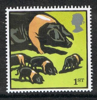 British Saddleback Pigs Illustrated On 2005 British Stamp - Nh photo