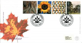 1 August 2000 Tree And Leaf Royal Mail First Day Cover Eden Project St Austell photo