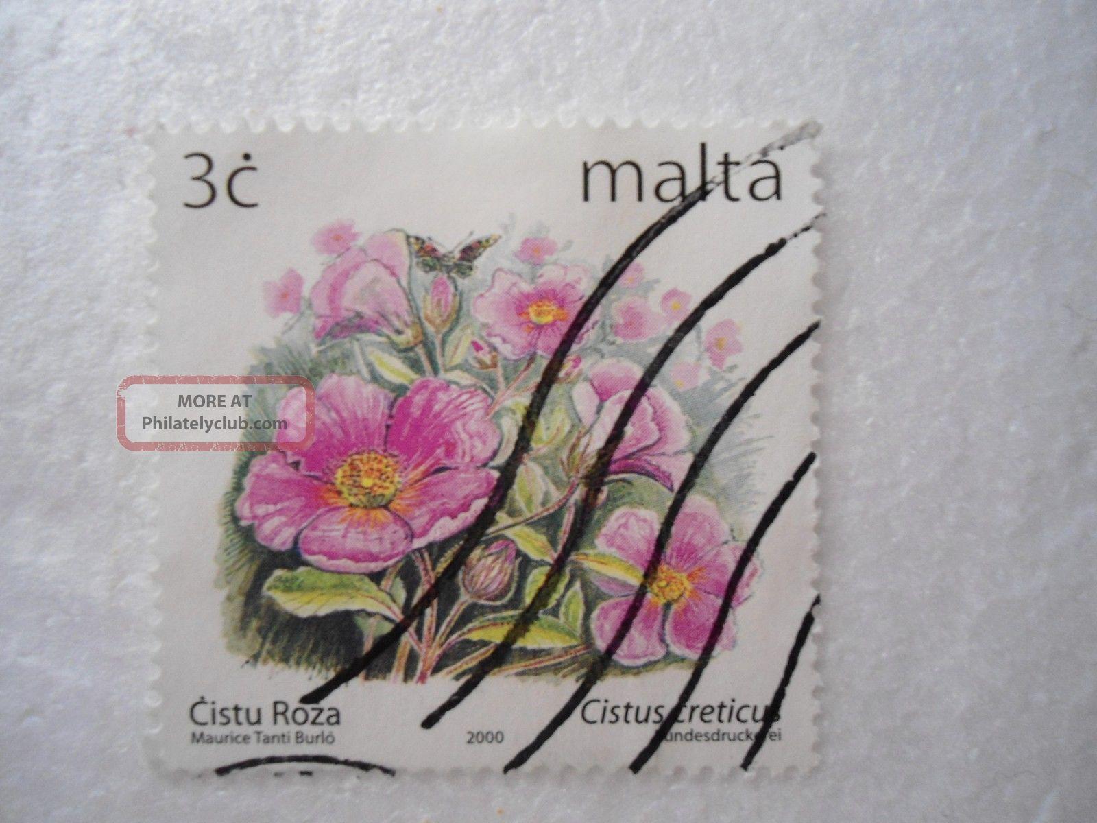 Definitive Flowers Iv 2003 - Cistus Creticus Europe photo